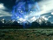 wolf_3