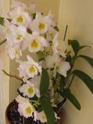 flores de 2010