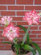 primavera 2010-2