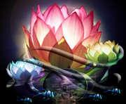 lotus_water5_500x412