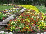 flores jardins de Banff