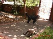 gatos 022
