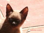 gatos 017