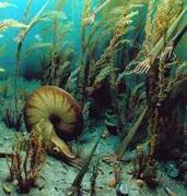 Maravilhas do mundo aquatico