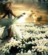 Flores nos caminhos...