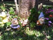 O Jardim dos gnomos