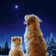 Peludos e estrelas