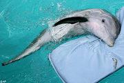 golfinho 2