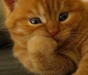 gato-pensando