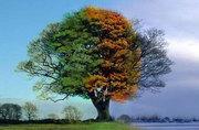 4-seasons-1-tree-4estações-druidas