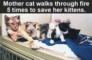 Mother cat walks through fire to save kittens