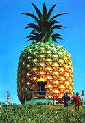 Pineapple Sunday