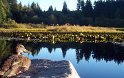 Stanley Park Young Naturalists: Secrets in the Shallows
