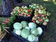 Growing Organic Food