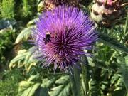 *Introduction to Native Pollinators