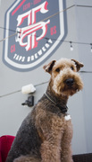 'Barks and Brews' Coming to Taps Brewery and Barrel Room