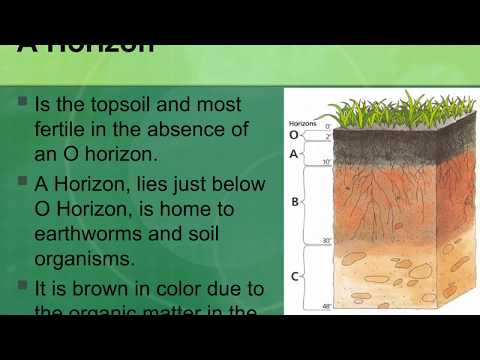 Jon Hill Turf | What is Soil Made Up Layers for Growing Turf