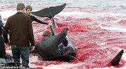 Ballenas en Dinamarca