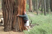 Tree Hugger-Yosemite National Park -CA