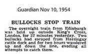 Bullock Stops Train