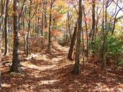 Along Indian Grave Gap Trail