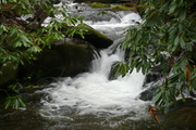 Anthony Creek