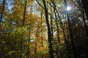 nature trail 024