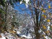 AT near Sweat Heifer trail