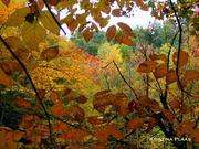 Tremont Trees