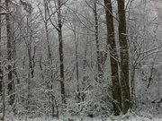 Winter 09 Greenbriar