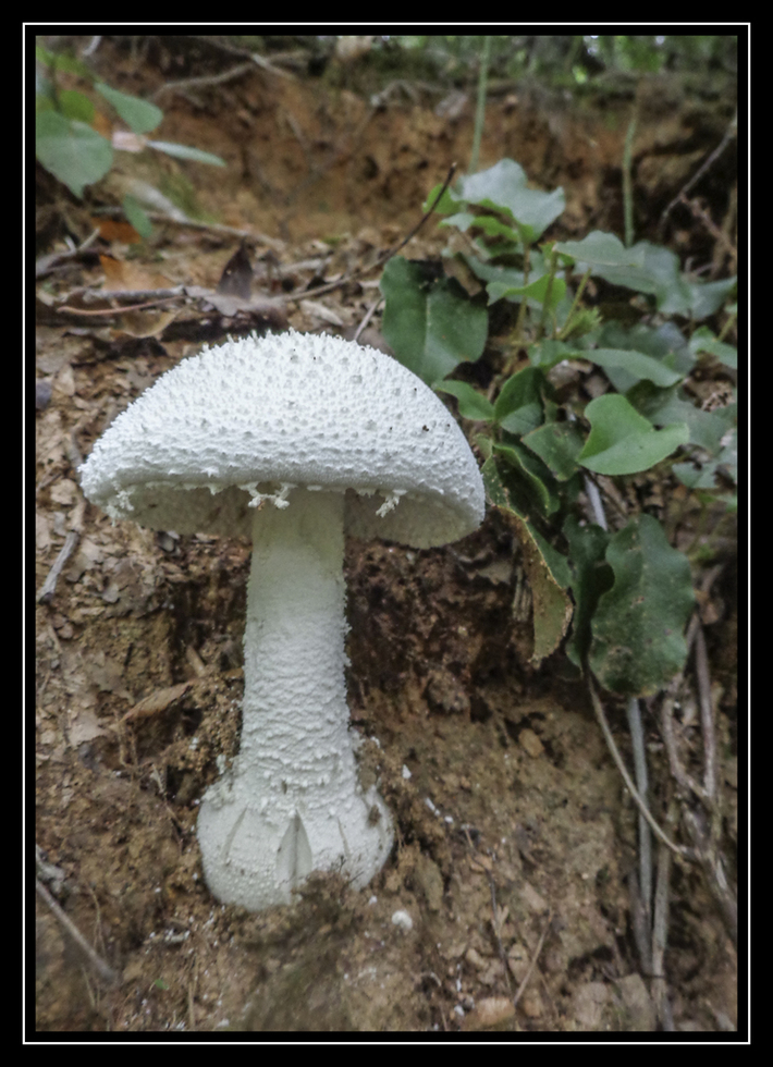 A  Woodland Treasure
