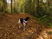 My Hound Dog