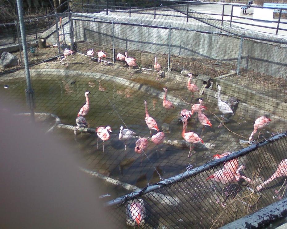 Franklin Park Zoo Flamingos