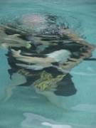 Jacob underwater 1