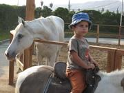 Horse riding summertime