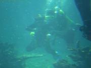 Shark Bait Boys Sea World Dive - 12-14 Dec 08 Dive 2 041