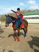 Caydon Farm Halloween Show Robert as Superhorse winning First Prize!