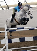 Hanoverian stallion Raffaello