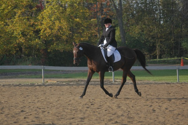 Harvey and Owner Win Reserve Champion 08
