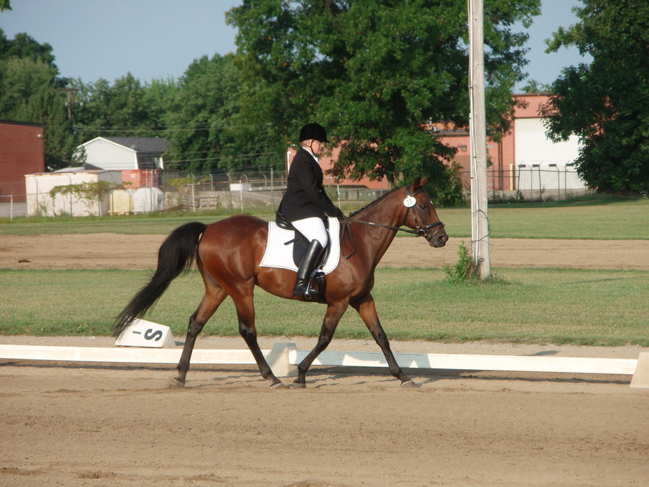 New Vocations Charity Horse Show 07004