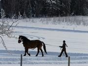 Winter at the Ranch