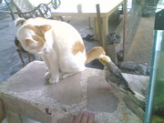Alladin(cat) and Tod(cockatiel)