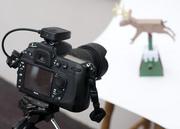 reindeer & camera