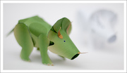 triceratops02