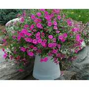 10-container-garden-ideas-that-are-cheap-or-free-500x399-small