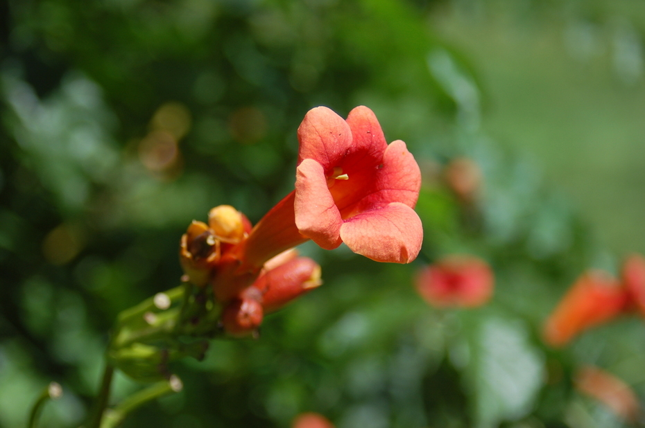 Flower trumpet- A symbol of God's creative love for us.