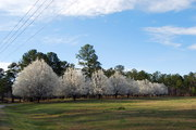spring has arrived in auburn, al (0308)