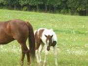baby horse 003