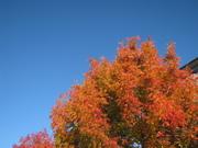 Autumn Orange Blue Sky