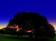 Trees in Philadelphia PA